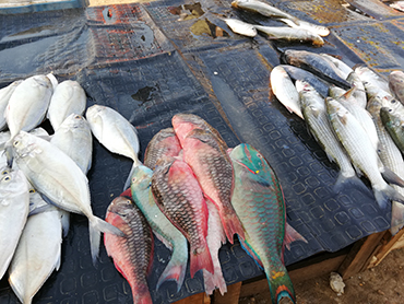 Fresh fish at the Bazurto Market in Cartagena during Walk the Arts food tour and watercolor worskhop in South America